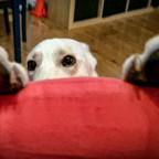 Diego schaut über den Rand des Sessels